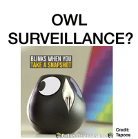 Memes, 🤖, and Owl: OWL  SURVEILLANCE?  BLINKS WHEN YOU  TAKE A SNAPSHOT  Credit:  Follow @schools hav  Tapoos Follow me @untoxic for more dank videos daily 🔥👌🏼