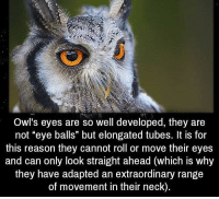 "owl: Owl's eyes are so well developed, they are  not ""eye balls"" but elongated tubes. It is for  this reason they cannot roll or move their eyes  and can only look straight ahead (which is why  they have adapted an extraordinary range  of movement in their neck)."