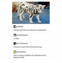 Beautiful, Halloween, and Memes: owlskitty  excuse me?? this cat owes me an explanation  sprachtraeume  a zebra  齶1ord.kitschener  Beautiful Cryptid Who Brings Blessings  lemonsharks  she is a being a skeleton for halloween she is  doing her best rare Pokémon - Max textpost textposts