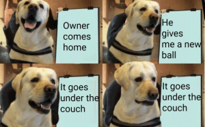 Dank, Memes, and Target: Owner  comes  home  He  gives  me a new  ball  It goes  under the  couch  It goes  under the  couch *sad woof* by ilikeclaymores MORE MEMES