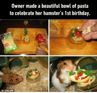 Aww, just look at its happy face! http://9gag.com/gag/ajD7bDw?ref=fbp: Owner made a beautiful bowl of pasta  to celebrate her hamster's 1st birthday.  VIA 9GAG.COM Aww, just look at its happy face! http://9gag.com/gag/ajD7bDw?ref=fbp