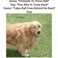 Funny, Run, and Hood: Owner Pretends To Throw Ball*  Dog: *Run After It, Come Back*  Owner *Takes Ball From Behind His Back*  Dog  lg: @hood clips Lmaoo