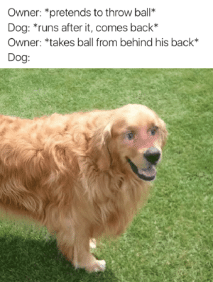 Did you just? by mijapi MORE MEMES: Owner: *pretends to throw ball*  Dog: runs after it, comes back*  Owner: *takes ball from behind his back*  Dog: Did you just? by mijapi MORE MEMES