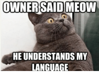 LOLcats: OWNER SAID MEOW  UNDERSTANDS MY  HE LANGUAGE