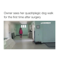 Oops I'm late: Owner sees her quadriplegic dog walk  for the first time after surgery  @COHMEDY Oops I'm late