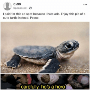 Yep, the legend reborn via /r/memes http://bit.ly/2VoBcTQ: Ox90  Sponsored  I paid for this ad spot because I hate ads. Enjoy this pic of a  cute turtle instead. Peace.  carefully, he's a hero) Yep, the legend reborn via /r/memes http://bit.ly/2VoBcTQ