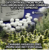 Memes, Tablet, and Tablets: OXY CONTIN KILLS MORE PEOPLE  THAN HEROINLANDCOCAINE COMBINED  FDA  YET ITIS Rx Only  e Real Farmacy.com  100 Tablets  L. Purdue Pharma P  Fresh News and Information  CANNABIS HAS KILLEDZERO  PEOPLEAND ISN'T EVEN LEGAL