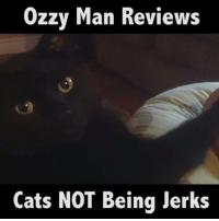 Memes, Reviews, and 🤖: Ozzy Man Reviews  Cats NOT Being Jerks Me commentary on cats NOT being jerks.🎙 (Feat. JukinVideo)