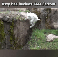 Memes, Parkour, and Reviews: Ozzy Man Reviews Goa  t Parkour Here's me commentary on the G.O.A.T 🎙