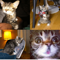 BABY BUB COLLAGE!: p BABY BUB COLLAGE!