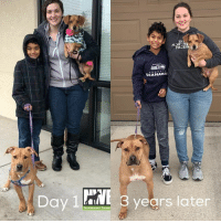 It's been three years since Rex joined the Rae family and by looking at the photos both the four legged and two legged boys in the family have grown! They are now one happy family,ready for more adventures!  Thank you Rae family for adopting and helping one more wiggle butt find their happy ending.: PACE  SEAHAWK  Day 1 la  8 years later  Northwest It's been three years since Rex joined the Rae family and by looking at the photos both the four legged and two legged boys in the family have grown! They are now one happy family,ready for more adventures!  Thank you Rae family for adopting and helping one more wiggle butt find their happy ending.