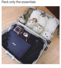 essentials: Pack only the essentials