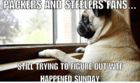 Still don't know what hit them: PACKERS AND STEELERS FANS  STILL TRYING TO FIGURE OUT WTF  HAPPENED SUNDAY Still don't know what hit them