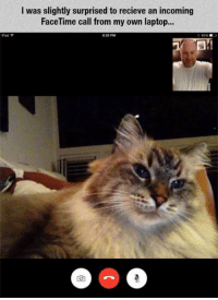 Facetime, Memes, and Grumpy Cat: Pad  I was slightly surprised to recieve an incoming  FaceTime call from my own laptop... Surprised and DELIGHTED!! Via Grumpy Cat Memes