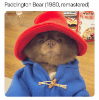 Memes, Bear, and Hell: Paddington Bear (1980, remastered)  PUREBI  5to a hell yea, loved this show