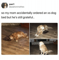 Friends, Memes, and Home: pae  @paetonmathes  so my mom accidentally ordered an xs dog  bed but he's still grateful.. That's the standard size of blanket man's receive when they sleepover at a friend's home • Follow @savagememesss for more posts daily