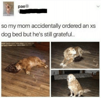 Good, Mom, and Boy: pae  so my mom accidentally ordered an xs  dog bed but he's still grateful <p>What a good boy</p>
