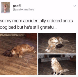 Mom, Dog, and Human: @paetonmathes  so my mom accidentally ordered an xs  dog bed but he's still grateful.. This dog is way more grateful when getting crappy presents than any human ever.Tw: paetonmathes