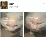 Dank, Shit, and Wyd: pain  @painhub  They  always ask  wyd  Not hyd Check out @commentawards for dank shit