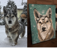 Old, Malamute, and Portrait: Painted portrait of our 14 year old Malamute.