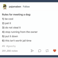 Jail, Memes, and Cool: pajamaben Follow  Rules for meeting a dog:  1) be cool  2) pet it  3) do not steal it  4) stop running from the owner  5) put it down  6) this isn't worth jail time  #lil #goochy  291,266 notes Pretty sure it's worth the jail time