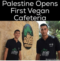 "On the 10th October 2016, Palestine's first ever vegan cafeteria, Sudfeh, opened its doors for the first time. Located on the campus of Al Quds (Jerusalem) University, the cafeteria is not only the first of its kind in Palestine, but also in any university in the Arabic-speaking world. It was safe to say that the team was hopeful, but more than a little nervous, about how Sudfeh might be perceived and, importantly, whether people would come and eat there. In Palestine, veganism is little-known and the animal rights movement is in its infancy so the idea of a vegan cafeteria seemed somewhat radical when the project was first mooted. But the team behind the cafeteria, which is run as a joint not-for-profit initiative by the Palestinian Animal League (PAL) and Al Quds University, need not have worried. From its first day, Sudfeh has been full of happy customers; indeed, the success of the first week saw the kitchen completely selling out of food every day and having to up the food production to ensure that hungry customers could get their fill of healthy, nutritious, cruelty-free food 🌱 In its first month, Sudfeh has provided over 1,600 vegan meals to students on campus and the feedback has been hugely positive. Initially sceptical, students soon realised that the food served in Sudfeh is not only freshly prepared by talented chef, Anan, and his team, but that the dishes on offer are familiar Palestinian cuisine which many do not realise are vegan by default. For example, hummus, foul (beans), soups, stuffed vine leaves and (of course) falafel, are delicious dishes that form a large part of the Palestinian diet and have always been vegan. Add to this traditional favourites which can be ""veganised"" very easily, such as maqluba (""upside-down rice"") and the Sudfeh menu enticed initially cynical students and staff and kept them coming back. 🌱 veganpalestine palestineanimalleague freepalestine israel palestine vegan vegantakeover: Palestine Opens  First Vegan  Cafeteria  Team  Vegan Cafe 6  Cafe &lestaurant  Ovegantakeover On the 10th October 2016, Palestine's first ever vegan cafeteria, Sudfeh, opened its doors for the first time. Located on the campus of Al Quds (Jerusalem) University, the cafeteria is not only the first of its kind in Palestine, but also in any university in the Arabic-speaking world. It was safe to say that the team was hopeful, but more than a little nervous, about how Sudfeh might be perceived and, importantly, whether people would come and eat there. In Palestine, veganism is little-known and the animal rights movement is in its infancy so the idea of a vegan cafeteria seemed somewhat radical when the project was first mooted. But the team behind the cafeteria, which is run as a joint not-for-profit initiative by the Palestinian Animal League (PAL) and Al Quds University, need not have worried. From its first day, Sudfeh has been full of happy customers; indeed, the success of the first week saw the kitchen completely selling out of food every day and having to up the food production to ensure that hungry customers could get their fill of healthy, nutritious, cruelty-free food 🌱 In its first month, Sudfeh has provided over 1,600 vegan meals to students on campus and the feedback has been hugely positive. Initially sceptical, students soon realised that the food served in Sudfeh is not only freshly prepared by talented chef, Anan, and his team, but that the dishes on offer are familiar Palestinian cuisine which many do not realise are vegan by default. For example, hummus, foul (beans), soups, stuffed vine leaves and (of course) falafel, are delicious dishes that form a large part of the Palestinian diet and have always been vegan. Add to this traditional favourites which can be ""veganised"" very easily, such as maqluba (""upside-down rice"") and the Sudfeh menu enticed initially cynical students and staff and kept them coming back. 🌱 veganpalestine palestineanimalleague freepalestine israel palestine vegan vegantakeover"