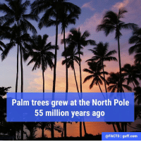Memes, Alligator, and 🤖: Palm trees grew at the North Pole  55 million years ago  @FACTS I guff.com In fact, 55 million years ago the Arctic was once a lot like Miami, with an average temperature of 74 degrees, alligator ancestors and palm trees, scientists say. 🌴