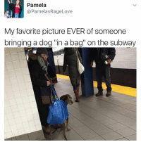 "How long does it take to assemble an IKEA Döggö 🥗: Pamela  @Pamelas RageLove  My favorite picture EVER of someone  bringing a dog ""in a bag"" on the subway How long does it take to assemble an IKEA Döggö 🥗"