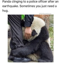 SOMETIMES LIFE IS HARD AF AND U JUST NEED TO BE THE LIL SPOON AND GET BEAR-HUGGED (panda-hugged? 😍) BY ANOTHER WONDERFUL HUMAN BLESS UP 😍😂😂😂 (@drsmashlove): Panda clinging to a police officer after an  earthquake. Sometimes you just need a  hug.  @DrSmashlove SOMETIMES LIFE IS HARD AF AND U JUST NEED TO BE THE LIL SPOON AND GET BEAR-HUGGED (panda-hugged? 😍) BY ANOTHER WONDERFUL HUMAN BLESS UP 😍😂😂😂 (@drsmashlove)
