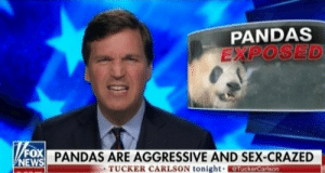 millennial-review:  We got presidential scandals galore and Tucker's really out here exposing Pandas.: PANDAS  EXPOSED  FoX  NEW  PANDAS ARE AGGRESSIVE AND SEX-CRAZED  TUCKER CARLSON tonight  TuckerCarlson millennial-review:  We got presidential scandals galore and Tucker's really out here exposing Pandas.