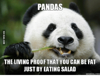 Proof, Pandas, and Living Proof: PANDAS  THE LIVING PROOF THAT YOU CAN BE FAT  JUST BY EATING SALAD  MEMEFUL COM