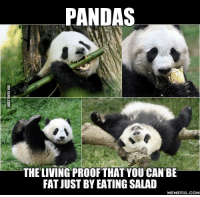 Dank, Meme, and Memes: PANDAS  THE LIVING PROOF THAT YOU CAN BE  FAT JUST BY EATING SALAD  MEMEFUL COM Being a vegetarian can make you so fluffy!