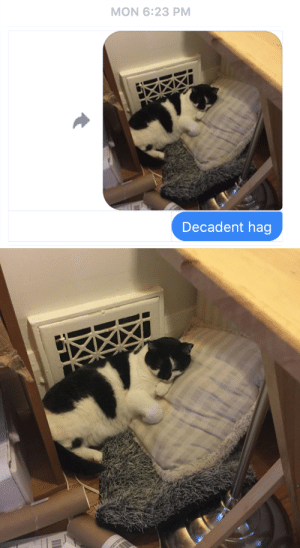 pangur-and-grim: rainaramsay:  pangur-and-grim: pressed against the heating vent with TWO big pillows Y'know… the longer I live in this world, the more I think cats have it figured out, man. I'm an adult with my own house, in charge of my own schedule, with an afternoon off, and am I going to spend it on top of two big pillows in front of a heating vent? No, I'm not, and why? Because I am not as wise as a friggin cat.   fellas, this is your intellectual aspiration : pangur-and-grim: rainaramsay:  pangur-and-grim: pressed against the heating vent with TWO big pillows Y'know… the longer I live in this world, the more I think cats have it figured out, man. I'm an adult with my own house, in charge of my own schedule, with an afternoon off, and am I going to spend it on top of two big pillows in front of a heating vent? No, I'm not, and why? Because I am not as wise as a friggin cat.   fellas, this is your intellectual aspiration