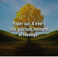 Revenge, Trees, and Glorious: Paper cut: A tree's  one glorious moment  of revenge. <p>Truth About Paper Cuts.</p>