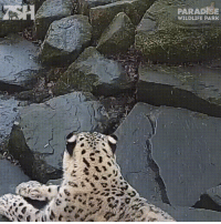 Funny, Paradise, and Trap: PARADISE  WILDLIFE PARK Do a little dance...