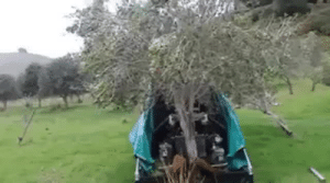 paradynamic:  unrepentantwarriorpriest:  tatted-matty:  Olive harvesting  Im going to be honest, I thought decepticon ambush, but sure why not.   Bad and naughty trees go to the  W I G G L E U M B R E L L A : paradynamic:  unrepentantwarriorpriest:  tatted-matty:  Olive harvesting  Im going to be honest, I thought decepticon ambush, but sure why not.   Bad and naughty trees go to the  W I G G L E U M B R E L L A