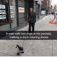 Dogs, Shoes, and Duck: PARAGON  A man with two dogs in his pockets,  walking a duck wearing shoes Credits to u/LilSnek361