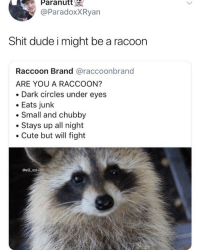 😂Are you?: Paranutt  @ParadoxXRyan  Shit dude i might be a racoon  Raccoon Brand @raccoonbrand  ARE YOU A RACCOON?  Dark circles under eyes  Eats junlk  Small and chubby  Stays up all night  Cute but will fight  øwll ent 😂Are you?