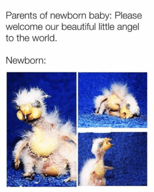 56 Best Funny Pictures That Are Unimaginably Hilarious - JustViral.Net: Parents of newborn baby: Please  welcome our beautiful little angel  to the world.  Newborn: 56 Best Funny Pictures That Are Unimaginably Hilarious - JustViral.Net