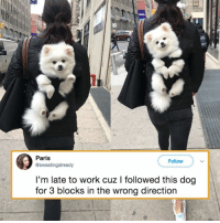 Aww, Dank, and Work: Paris  @sweatingalready  Followv  I'm late to work cuz I followed this dog  for 3 blocks in the wrong direction Aww I need this backpack for my doggo.  By sweatingalready | TW