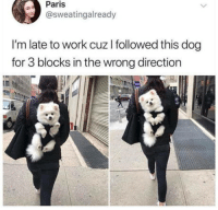 "Club, Tumblr, and Work: Paris  @sweatingalready  I'm late to work cuz I followed this dog  for 3 blocks in the wrong direction <p><a href=""http://laughoutloud-club.tumblr.com/post/173587132514/come-back"" class=""tumblr_blog"">laughoutloud-club</a>:</p>  <blockquote><p>Come back!</p></blockquote>"