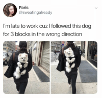 Dank, Work, and Paris: Paris  @sweatingalready  I'm late to work cuz l followed this dog  for 3 blocks in the wrong direction  I1