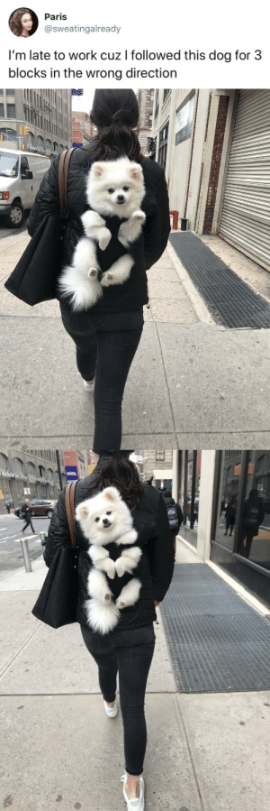 Target, Tumblr, and Twitter: Paris  @sweatingalready  l'm late to work cuz I followed this dog for 3  blocks in the wrong direction tastefullyoffensive:  Worth it. (via sweatingalready)