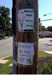 parrot: Parrot  Lost  Banded  Reward  720  PARROT  BBQ  SATURDAY 12  E EARLY  IS