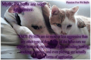 Dogs, Memes, and Hunting: Passion For Pit Bulls  |Myth: Pit buls are very  aggressive.  FACT: Pit bulls are no more or less aggressive than  any other type of dog Many of the behaviors  expect from and encouage in dogs, including hunting,  tracking, guarding and even playing,  are actually  modified forms of aggression. **Cherie**