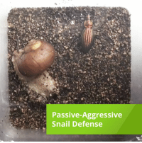 Some snails hide in their shells to avoid predators.  Others, not so much... —via Explorist: Passive Aggressive  Snail Defense Some snails hide in their shells to avoid predators.  Others, not so much... —via Explorist