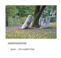 Tumblr, Tree, and Back: pastperspectives:  guys... it's a palm tree. back to posting as per usual!!