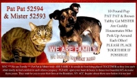 """Being Alone, Animals, and Beautiful: Pat Pat 52594  & Mister 52593  10-Pound Pup  PAT PAT & Brown  Tabby Cat MISTER  Are Cuddly  Housemates Who  Perk Up Around  Each Other!  PLEASE PLACE  TOGETHER IF  POSSIBLE!  ata  We beloug togstier oX0  NYC*""""We are Family Pat Pat & Mister truly ARE FAMILY & would do best being placed TOGETHER as they love each  other dearly & find comfort in each others company. PLEASE, open your heart &home to theses two beautiful bffs & make  them yours. They wait for you to save their lives at the Brooklyn, NY ACC. Inquire about them now before it is too late! **FOSTER or ADOPTER NEEDED ASAP**  NYC *** We are Family *** Pat Pat & Mister truly ARE FAMILY & would do best being placed TOGETHER as they love each other dearly & find comfort in each others company cuddling & sleeping together. PLEASE, open your heart & home to theses two beautiful BONDED bff's & make them yours. They wait for you to save their lives at the Brooklyn, NY ACC. Inquire about them now before it is too late!  The Shelter WRITES: PAT PAT the little dog and MISTER the kitty, housemates surrendered together, enjoy cuddling up with each other!     MISTER was still in our medical exam room when doing PAT PAT's exam & the medical staff noticed that PAT PAT stopped shaking and MISTER perked up and started towards front of his cage when they saw each other!  IF YOU CAN, PLEASE PLACE THIS CUTE COUPLE TOGETHER!  Pat Pat 52594 – 5 yr. male black/brown small dog, OS, 10 pounds Mister 52593 – 4 yr. male brown tabby, OS, 8 pounds  ************************************** To FOSTER or ADOPT this adorable BONDED pair, SPEAK UP NOW & Save a Life, APPLY with rescues OR message Must Love Dogs - Saving NYC Dogs IMMEDIATELY!!!! **************************************  The general rule is to foster you have to be within 4 hours of the NYC ACC approved New Hope partner rescues you are applying with and to adopt you will have to be in the general NE US area; NY, NJ, CT, PA, DC, MD, DE, NH, RI, MA,"""