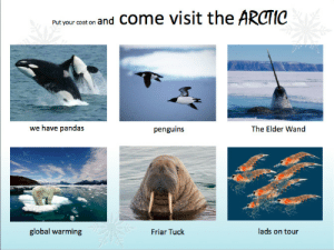 On Tour: Pat your cat on and Come visit the ARCTIC  we have pandas  penguins  The Elder Wand  lads on tour  global warming  Friar Tuck