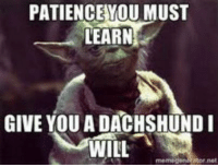 That would definitely do it!: PATIENCE YOU MUST  LEARN  GIVE YOU A DACHSHUND I  WILL  memegen Ator net That would definitely do it!